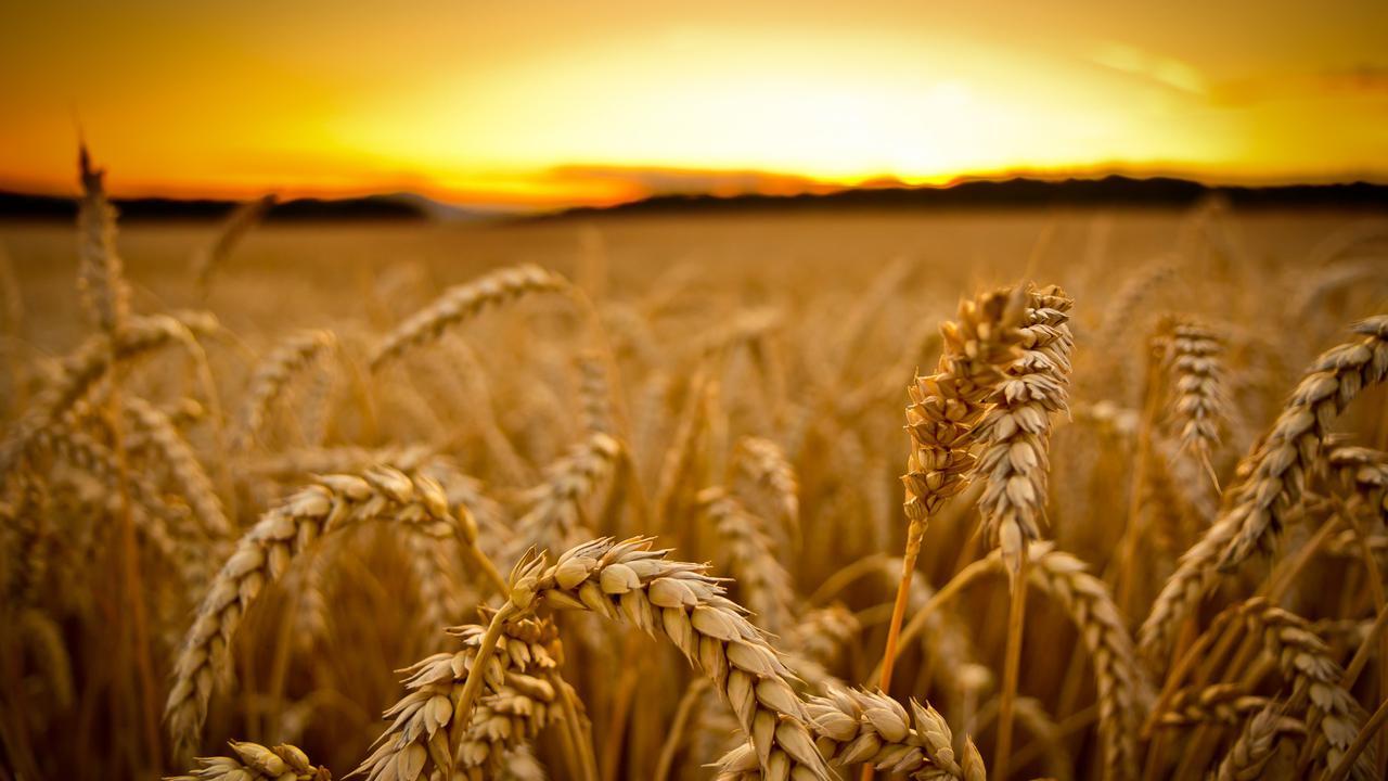 Buğday ithalatında rekor! TÜİK, Erdoğan'ı yalanlıyor