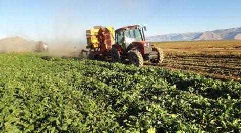 Tarım-ÜFE Şubat'ta yüzde 2,56 yükseldi