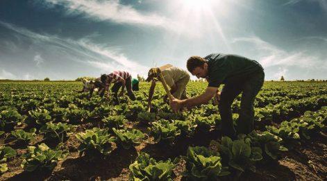 Çetin Ünsalan Yazdı: 'Bütçeden tarıma aslan payı'