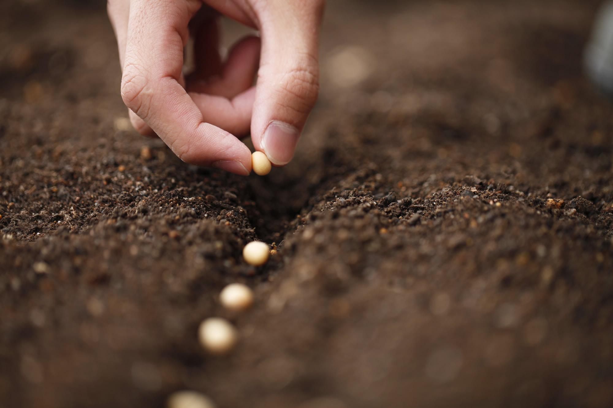 """TÜRKTOB: Küresel Salgının Getirdiği Endişelere Çözüm; """"Milli Tohum"""""""