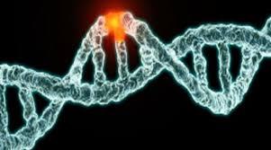 Başkanlık rejimi devletin DNA'sını değiştiriyor
