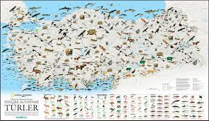 Burası Dünya, burada hayvanlara yer yok!