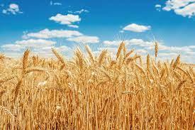 BM Gıda ve Tarım Örgütü: Gıda fiyatları enflasyonu yıllık yüzde 32,8'le 10 yılın zirvesinde!
